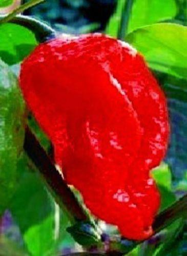 schärfegrad chilli